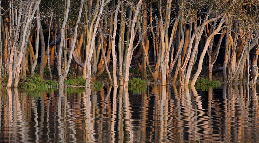 mangrove_colours_2_9997